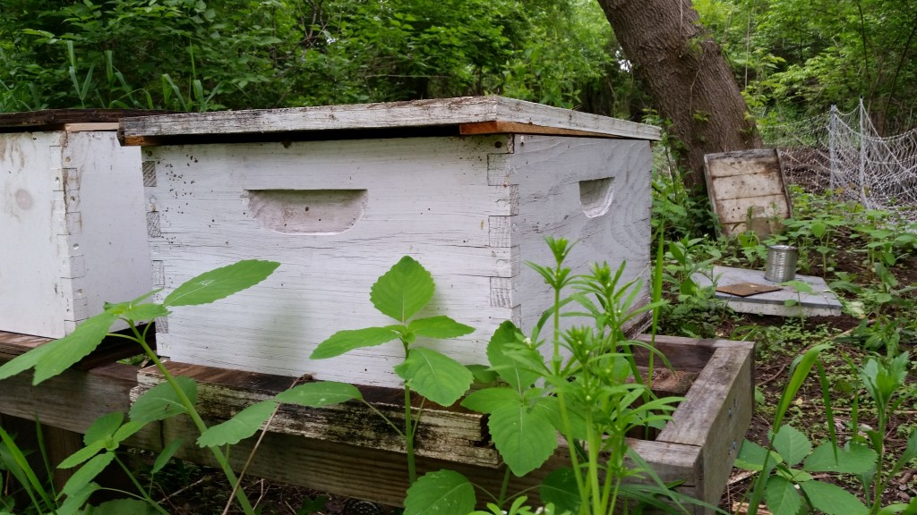 Beehive Top Entrance